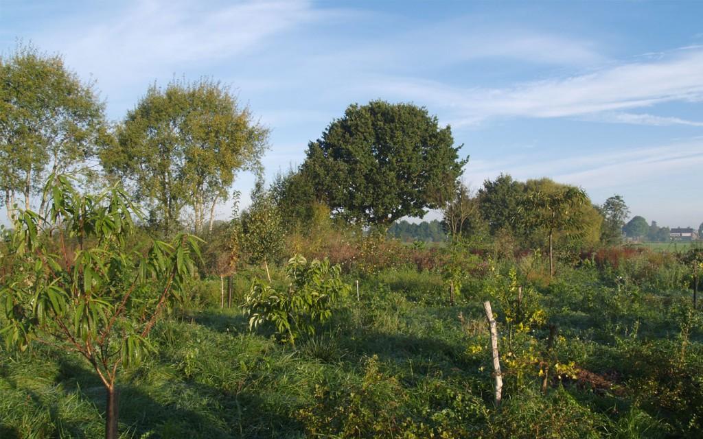 Food Forestry Netherlands | Toekomstboeren