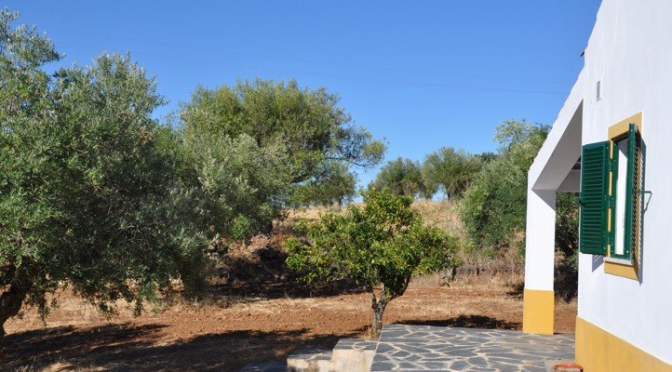 1 hectare land te koop in Portugal!