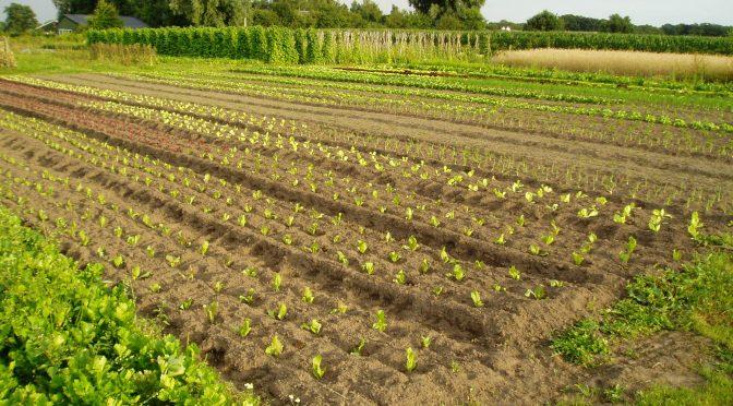 Te koop: 1,8ha biologisch land Scherpenzeel (Gld)